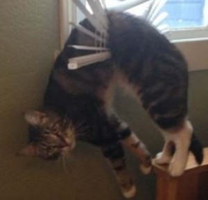 funny-cat-hanged-with-window-blinds-pics